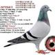 創作者 翔聖鴿舍 的頭像