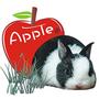 愛攝影的蘋果兔