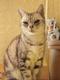 創作者 萬里一隻貓 的頭像