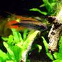 beareatfish