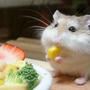 進食的巨鼠