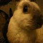 bunny24h