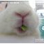 bunnyhase