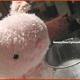 創作者 bunnylinn 的頭像