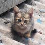 catbycat
