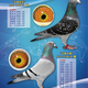 創作者 ATT-歐洲銘鴿 的頭像