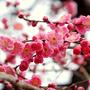 flowerblossom