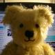 創作者 木子熊 的頭像