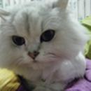 宅貓 圖像