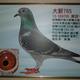 創作者 新竹鴿舍 的頭像
