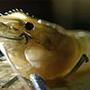 有機養蝦學會