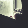 jl_bear