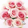 Rose X English