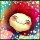 創作者 幸福蟹居 的頭像