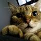 創作者 火星刁貓 的頭像