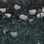 opiumocean