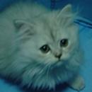ottocat 圖像