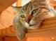 創作者 Just A Cat喵 的頭像