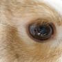 rabbitinmyheart