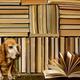 創作者 雷根二手書店 的頭像