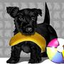 叼香蕉的小黑與球