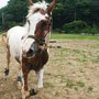 Farm servant