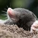創作者 Mole的生活垃圾桶 的頭像