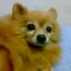 secretdog