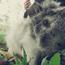 兔寶(天竺鼠)