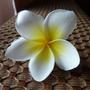 最喜歡看閃光文的小花